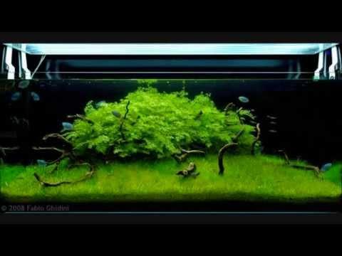 Planted Tanks - Aquarium Aquascaping Contest 2008 - YouTube