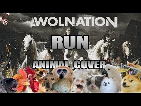 Awolnation - Run (Animal Cover)