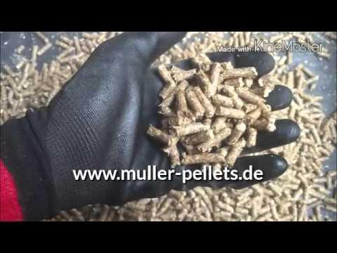 Pelletpresse Holz Pellet Herstellung