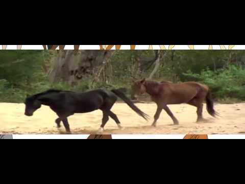 Documentary #Love Brumby , Real Stories New HD 2016 for kids
