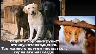 """Стихи """"Отдам в хорошие руки"""" Анна Куприенко"""