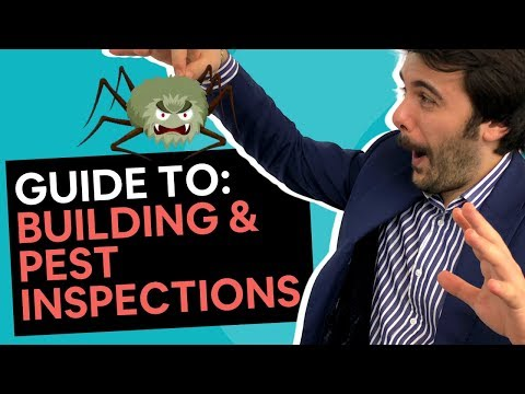 Building & Pest Inspections [7 Things You Need To Know]