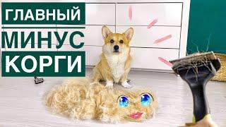 Главный МИНУС КОРГИ посмотри это видео перед покупкой собаки