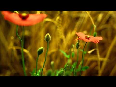 Amazing Nature HD (Plants Growing)