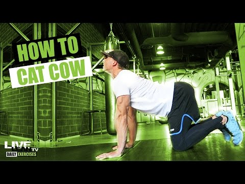 how to do a cat cow  exercise demonstration video and
