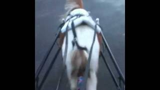 Driving Miniature Horse