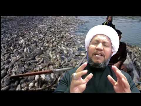 مؤامرة موت ملايين الاسماك ودمار الثروة السمكية في انهار العراق وتتابع المؤامرات حتى آخر نفس من انفاس