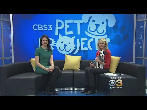 CBS 3 Pet Project: Emotional Support Animals