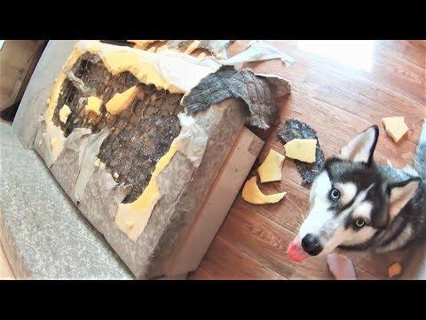 Собаки не виноваты просто за 15 апреля
