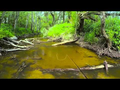 ловля форели в калининградской области