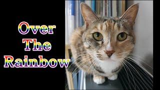 [두부와 피아노 054] Over The Rainbow(오버 더 레인보우)