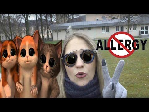Аллергия на кошку как -