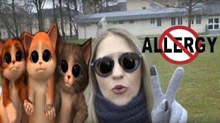 Аллергия на КОШЕК. Что делать? Как избавиться?