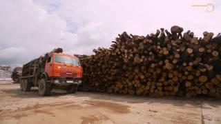 «Кубань на высоте». Производственно-деревоперерабатывающий комплекс «Апшеронск».