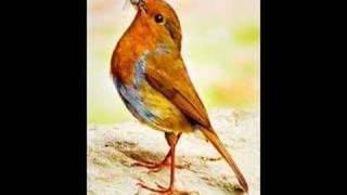 Wrex Tarr - Cocky Robin