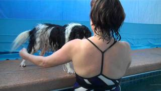 Warm Water Dog Swimming -- Come Swim With Your Dog At Rummy's Beach Club In Spring, Texas