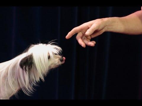 Comedy dog show, Funny dogshow, Circus Dog, Showdog