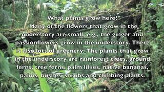 (Rainforest) Understory