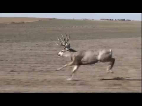 Big Buck Run 20,000 + Views