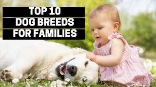 TOP 10 DOGS FΟR FAMILIES - Best Puppy Breed For Children