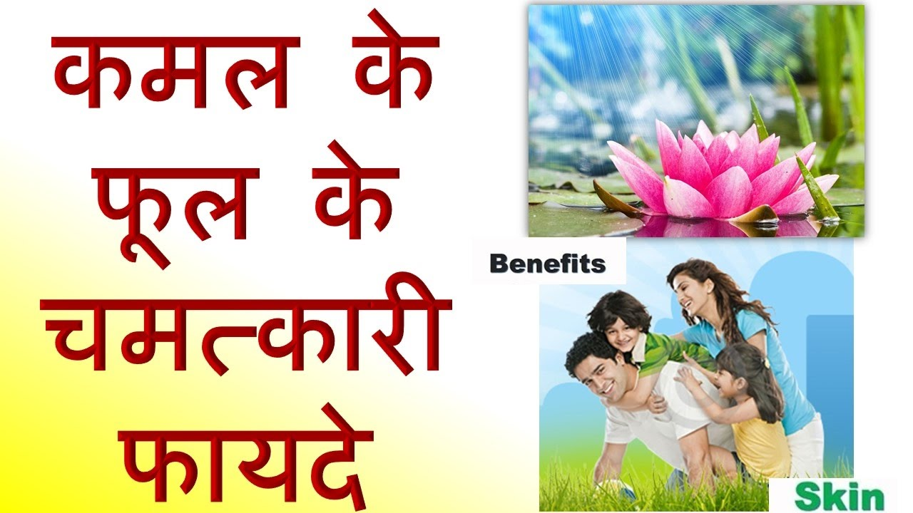 Miraculous benefits of lotus flower miraculous benefits of lotus flower izmirmasajfo