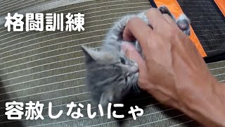 赤ちゃん猫、格闘訓練はじめました(子猫を保護その10)