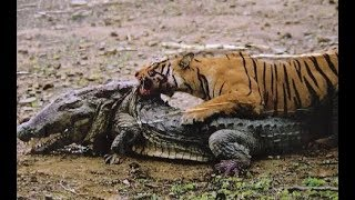 Top 10 Craziest Animal Fights Caught On Camera Part 2