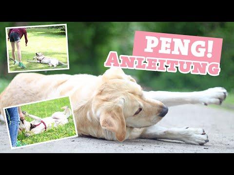 Hund PENG / tot stellen beibringen | Tricks Hundetrick Video | Hundekanal