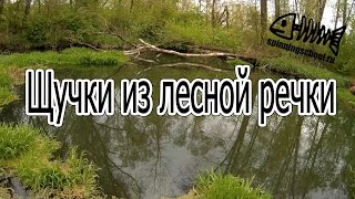 Щучки из лесной речки