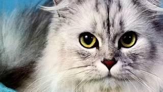 Почему нельзя удалять кошкам когти? | Всё о кошках #2