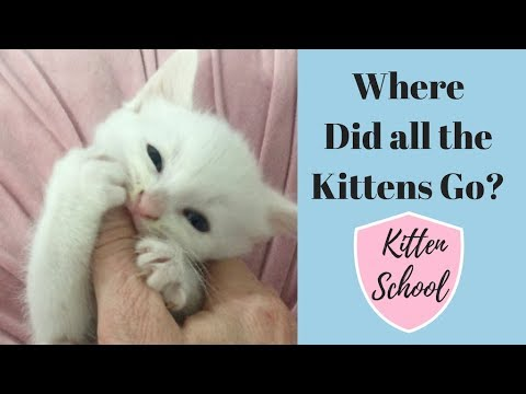 Why are there NO KITTENS at Kitten School?