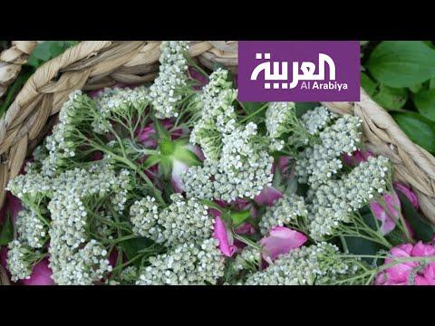 صباح العربية | لن تصدق أنها صابون!  - نشر قبل 42 دقيقة