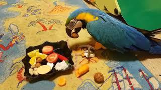 Попугай ара: поздравление с Днём Рождения!