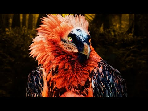 12-strangest-and-rarest-birds-in-the-world!
