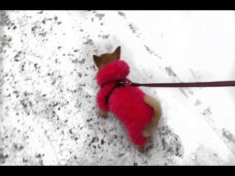 Вязаная одежда для собак своими руками фото 795