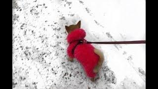 видео Вязаный костюм для собаки