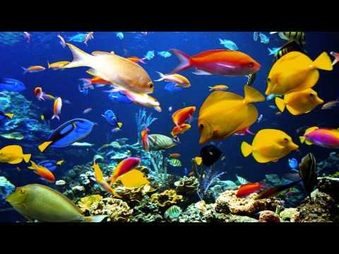 SaintSaens: Carnival of the Animals  Aquarium