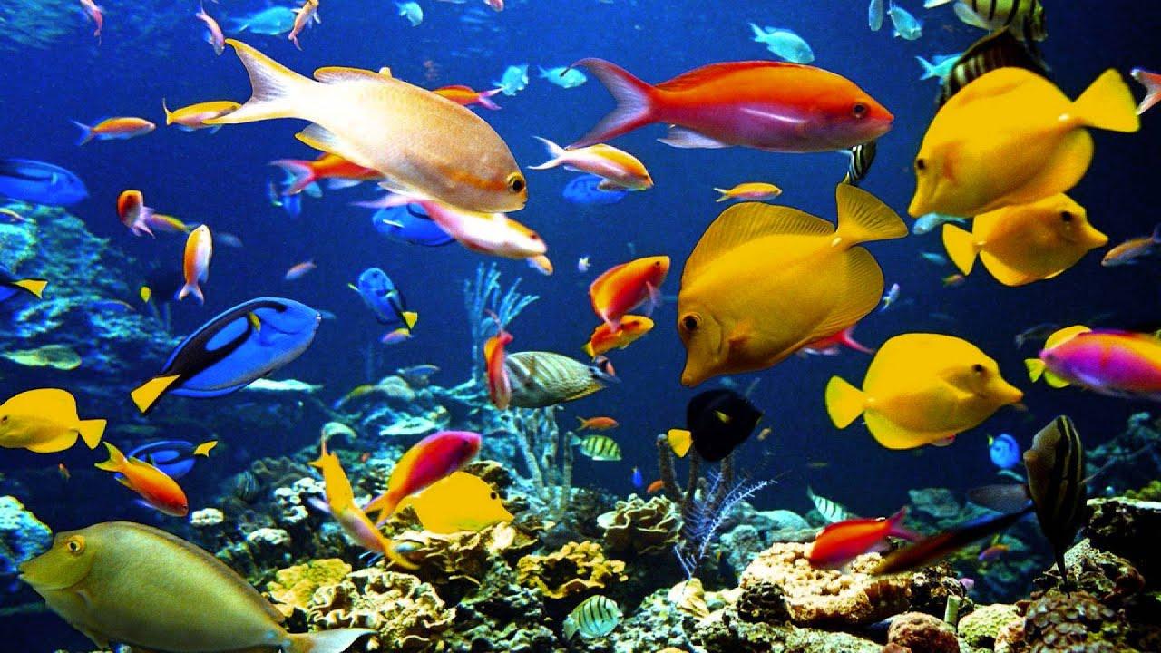 saens carnival of the animals aquarium