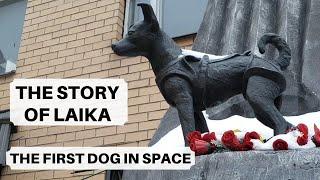 The First Dog In Space | Лайка Первая собака в космосе | Stolovaya 57 Review