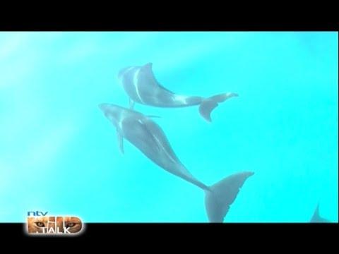 "NTV Wild Talk S5 E6 ""Delightful dolphins"""