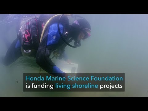 Honda Marine Science Foundation: Preserving Southern California's Shoreline