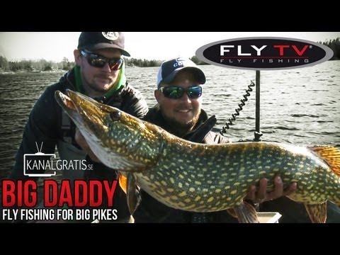FLY TV - Big Daddy