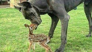 The Best Animals Friendship 2020