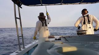 New 2016 yellowtail fishing