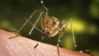 Mosquito season and flooding raise fears about Zika virus