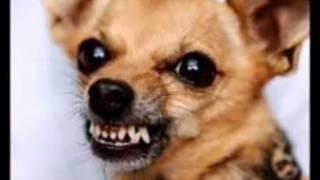 Что делать если вас укусила собака