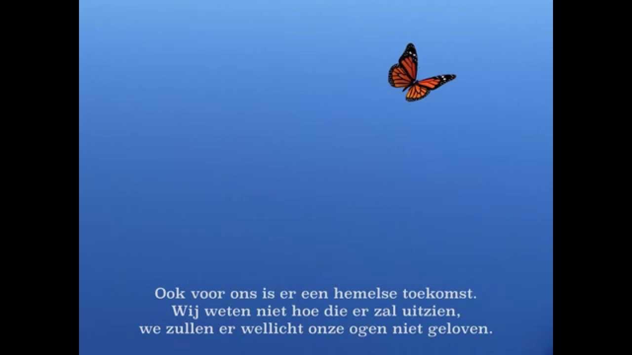 De Symboliek Van De Vlinder