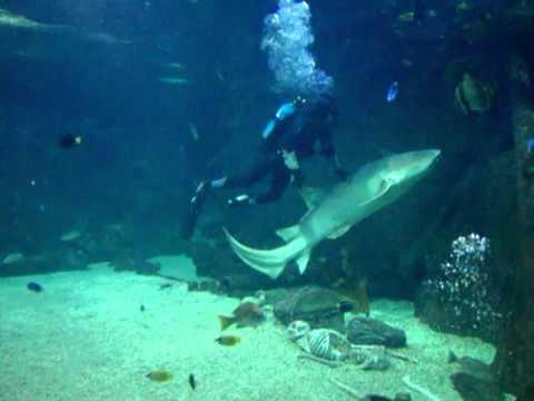 Океанариум в г Сочи