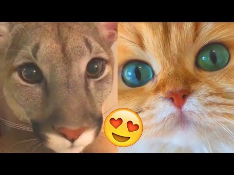 Я РЖАЛ ПОЛ ЧАСА | Смешные Коты и Собаки | ПРИКОЛЫ С ЖИВОТНЫМИ | Cute Cats