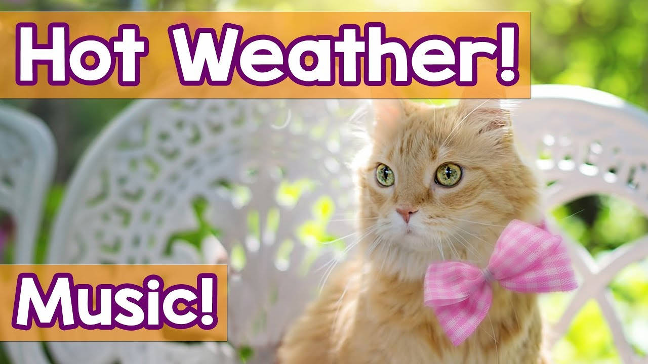 Cat Music: Music to Help Your Cat Deal with the Heat! Hot Weather Can  Stress Cast, We Can Help!